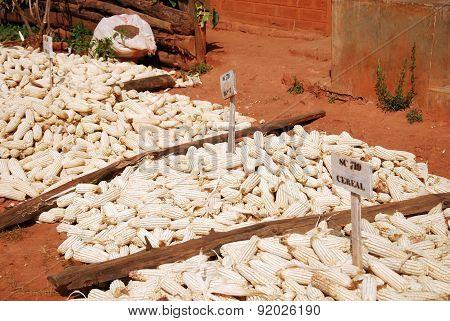 Malze In Tanzania