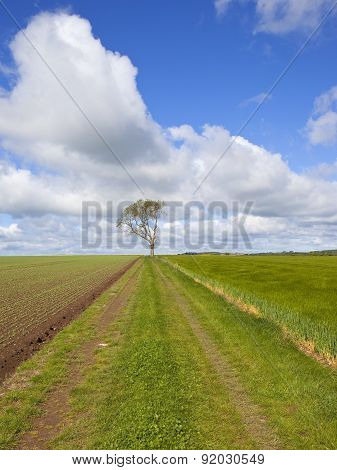 Agricultural Farm Track With Ash Tree