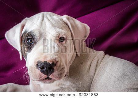 Cute puppy in studio
