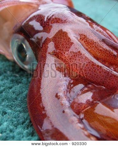 Closeup Of Freshly-Caught Squid