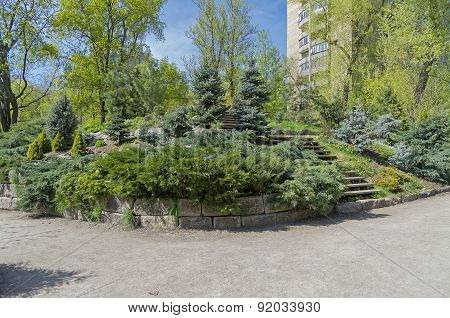 Conifer Trees In A Botanical Garden.