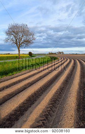 Plowed Field In Spring