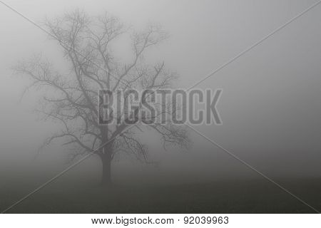 Cades Cover Tree in Fog