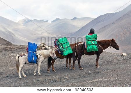 Three Horses With Heavy Load