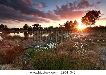 Gold Sunset Over Lake With Cottongrass