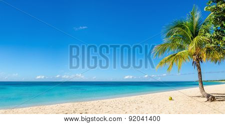 Sandy beach with coconut palm, Caribbean Island