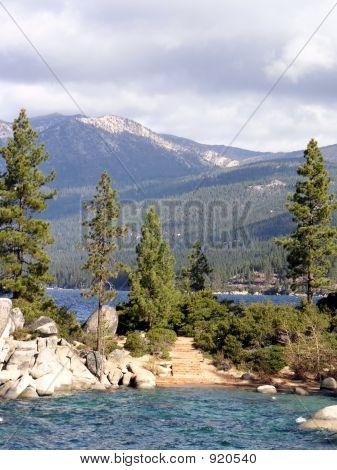 Trees At Lake Tahoe