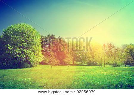 Sunny summer countryside, park. Vintage, retro. Trees, green grass.