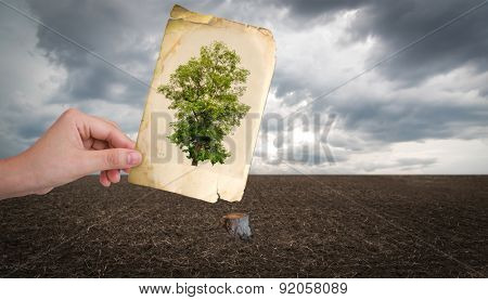 Hand hold vintage picture of tree over cut trunk