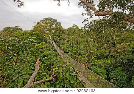 Rain Forest Canopy Suspension Trail
