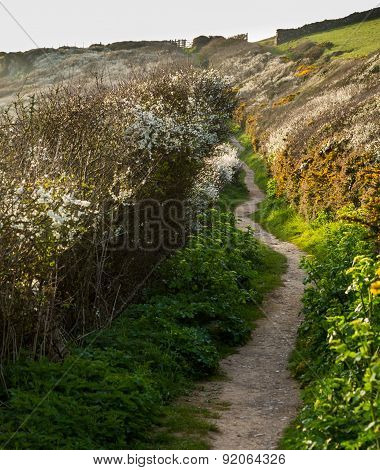 South West Coast Path Near Port Quin, Cornwall