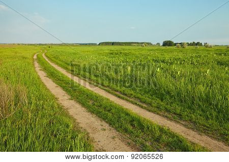 Wheat field with tractor trails