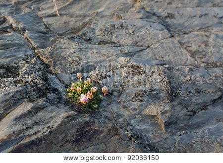 Small Flowers Growing In Harsh Rock