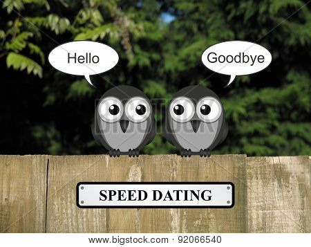 Birds Speed dating