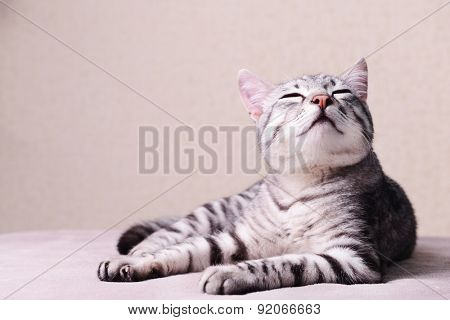 Beautiful cat on beige background