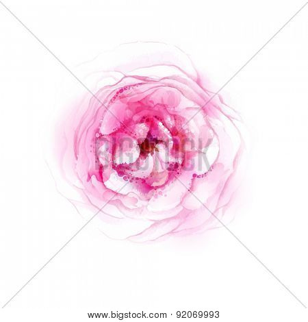 Pink rose blossom. Watercolor image vector.