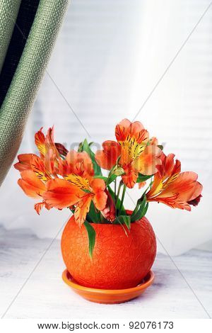 Beautiful alstroemeria in pot on windowsill