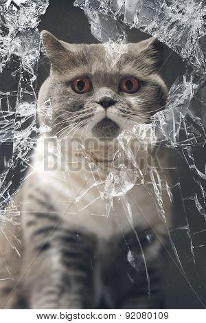 Innocent Cat Looking Thru A Broken Window