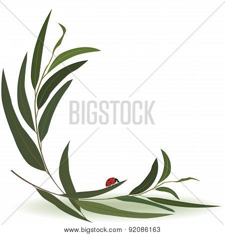 Ladybird And Eucalyptus