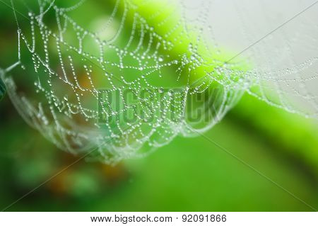 Watering spider web in a garden