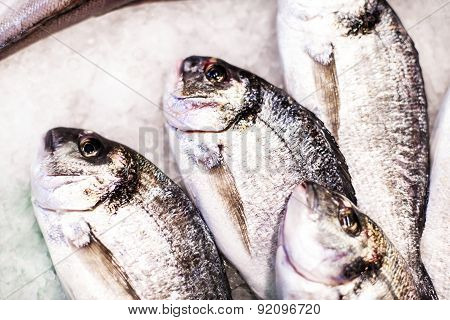 Delicious  Fresh Fish On Ice On The Market. Dorado Fish On White Iced Background - Healthy Food, Die
