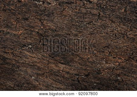 surface texture of tree bark