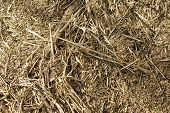 stock photo of driftwood  - The closeup of twigs and dried Driftwood and reeds on the banks of a river - JPG