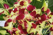 foto of yellow orchid  - Red yellow orchids in the bouquet of flowers - JPG