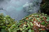 picture of creeping  - Creeping ivy on the ground outdoors with small pond - JPG