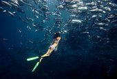 foto of jacking  - Young lady diving by the school of Jack fish on the single breath - JPG