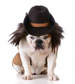 image of wig  - funny dog wearing western hat and wig on white background - JPG