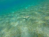 picture of sea-turtles  - Turtle sitting on the sea bottom - JPG