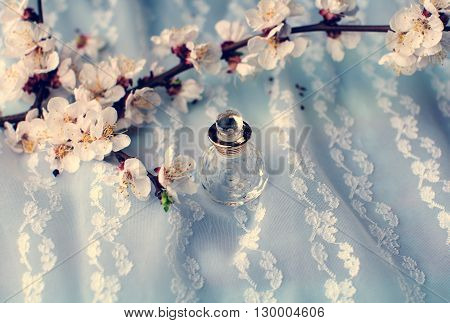 Bottle Of Perfume Surrounded By Apricot Blossom