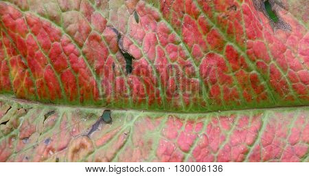 picture of a leaf texture damaged by herbicide