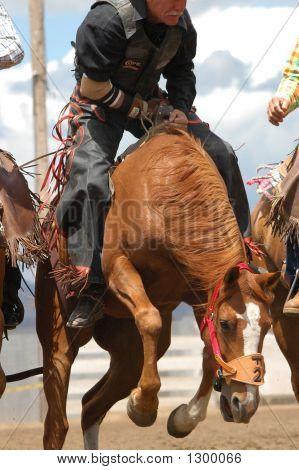 Senior Pro Rodeo Bare Back Rider