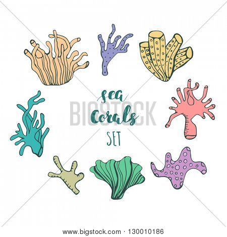 Set of hand drawn underwater coral reef elements. Vector  design  for your sea life illustration. Blue, pink, green, orange corals on white background