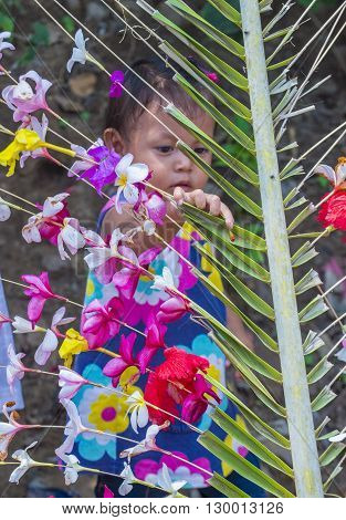 PANCHIMALCO EL SALVADOR - MAY 08 : A Salvadoran girl decorates palm fronds with flowers during the Flower & Palm Festival in Panchimalco El Salvador on May 08 2016