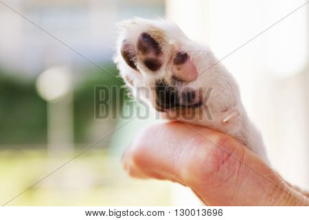 Man And Puppy Shaking Hand And Paw