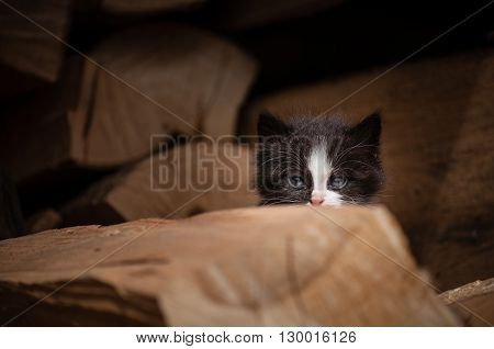 Small kitty hiding behind a wood stack.