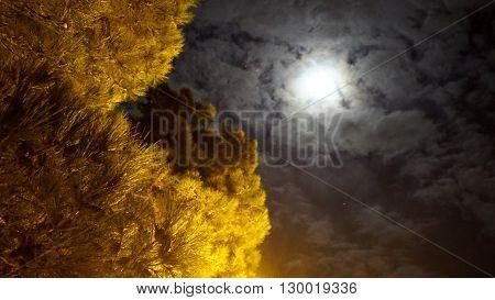 Full moon mystic night in park.  Spruce
