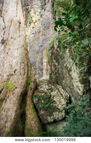 Large cliff face on the way to Purlingbrook falls in Springbrook National Park, Queensland.