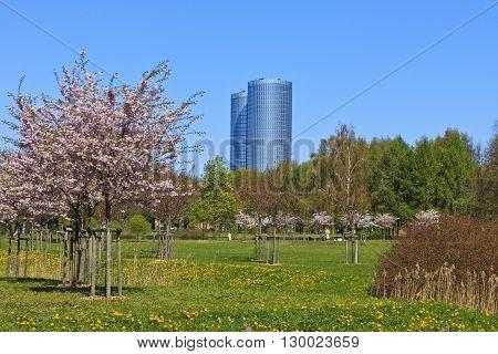 Victory park at Rīga in spring flowering time.