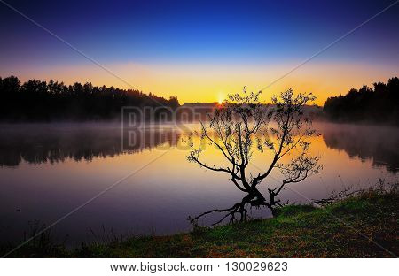 Lonely tree growing in a pond at sunrise. Dramatic silhouette