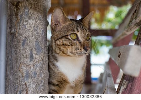 pet cat in a bungalow on the beach
