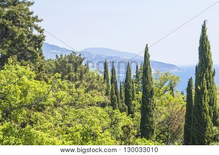 Background landscape view of the park of Livadia palace with cypresses and distant blue mountains in the distance