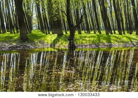 Forest For The Trees Aligned
