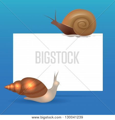 Banner template with snails and place for text. Vector element for your design. Snail Achatina and snail Marisa