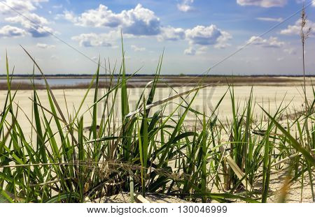 Green grass closeup on the background of white sandy beach distant lake and blue sky with cumulus clouds de-focused.