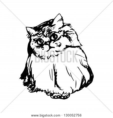 Graphic image of domestic cat. Fluffy cat on a white background vector
