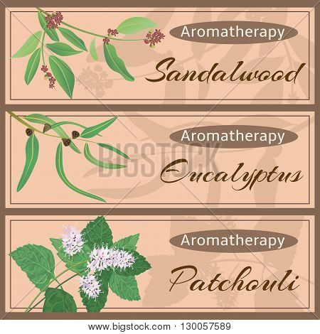 Aromatherapy set collection. Sandalwood eucalyptus patchouli banner set. Vector illustration EPS 10.